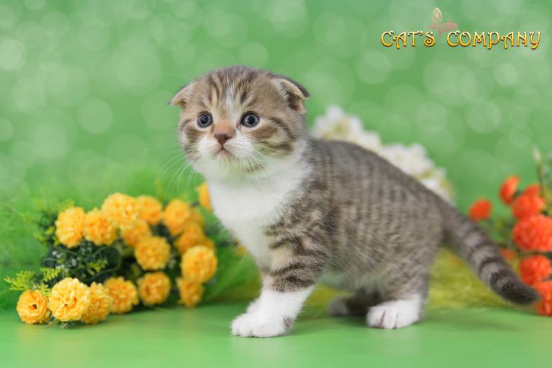 Камелот Шекспир Cat's Company