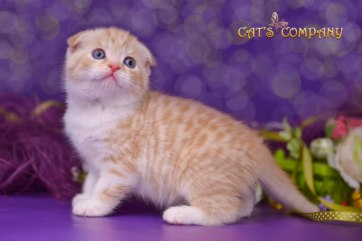 Ланселот Шекспир Cat's Company