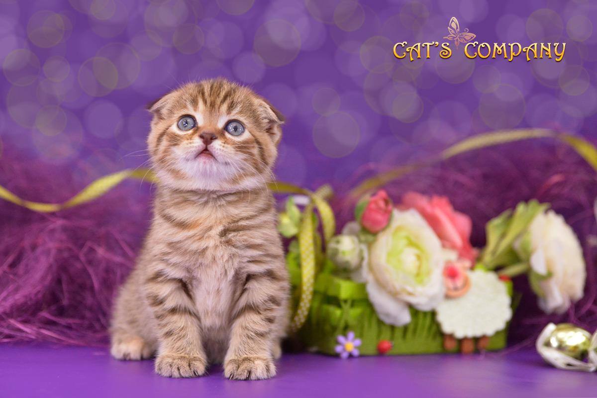 Леопольдина Шекспир Cat's Comina-11b
