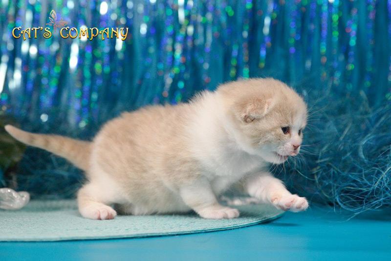 Невада Честер Cat's Company