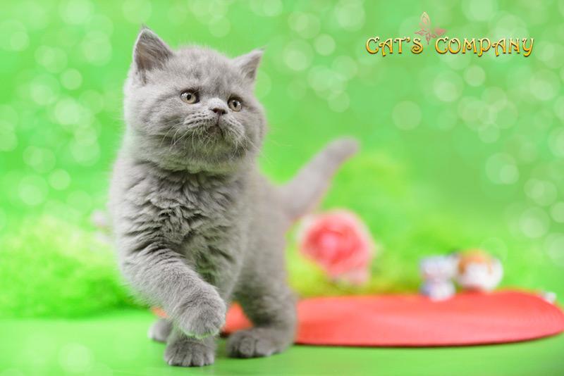 Джози Честер Cat's Company