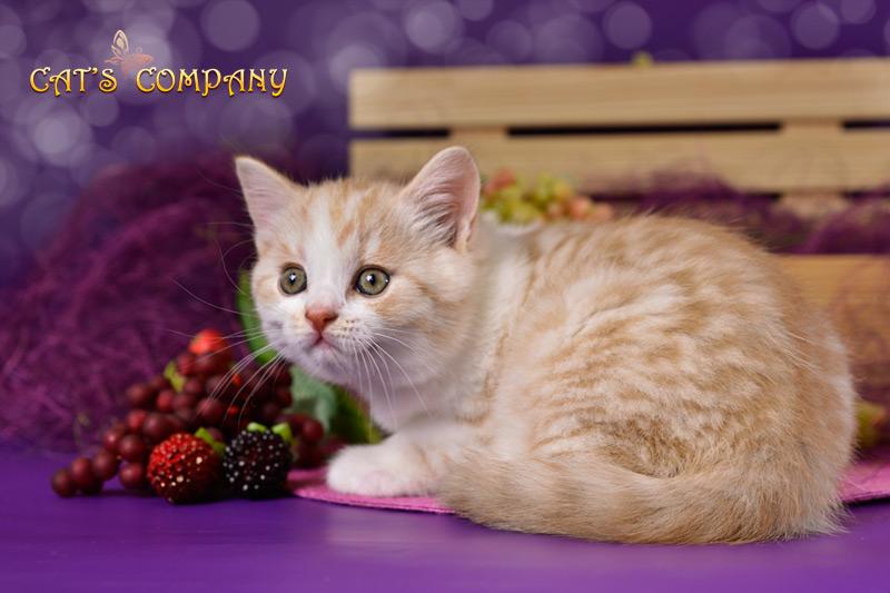 Орландо Шекспир Cat's Company
