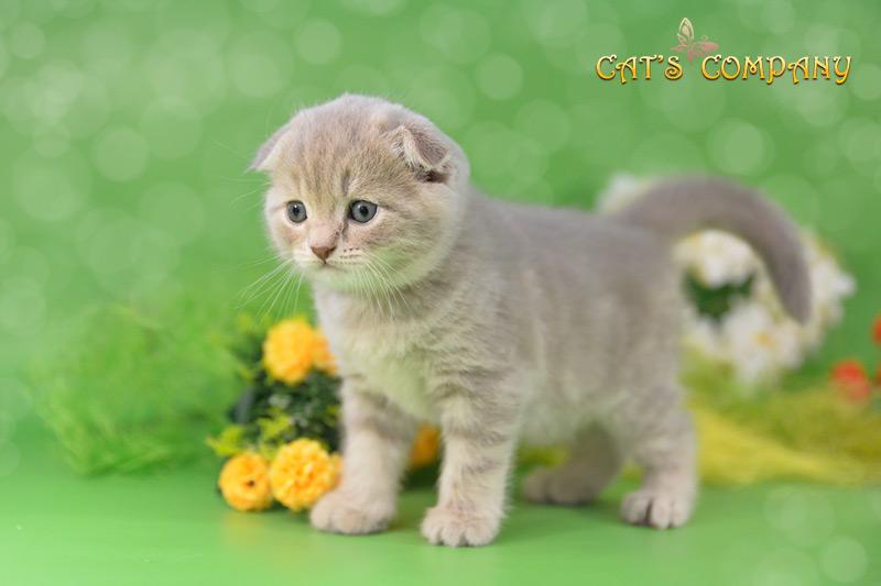 Клиффорд Шекспир Cat's Company