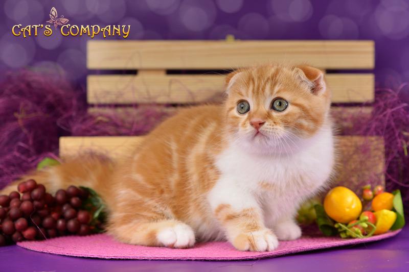 Оливер Шекспир Cat's Company