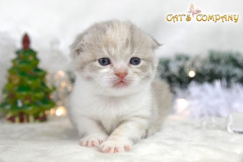 Нерика Честер Cat's Company