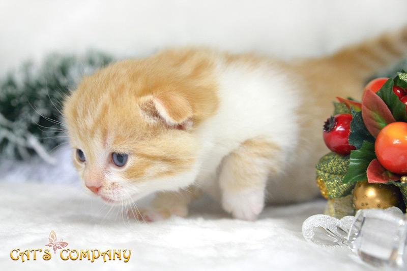 Нортон Честер Cat's Company