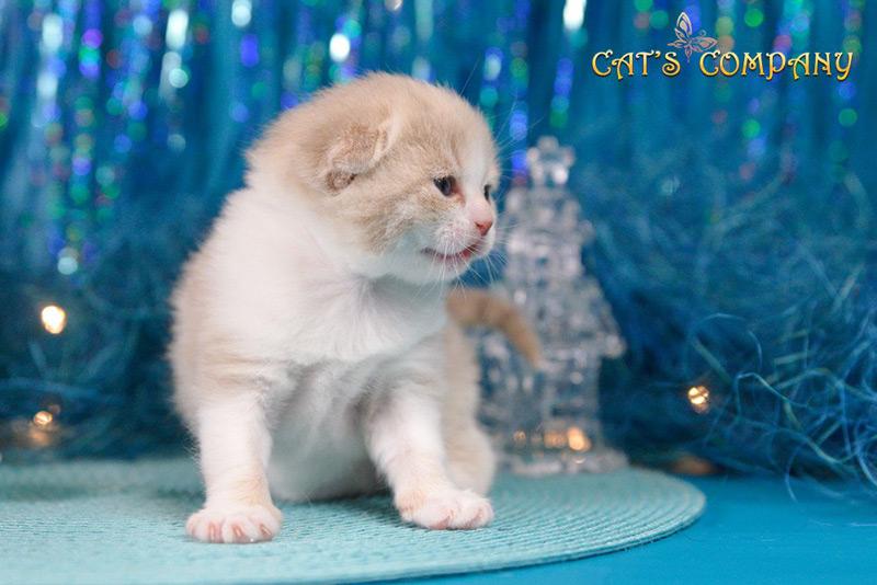 Невада Честер Cat's Companyda-03i