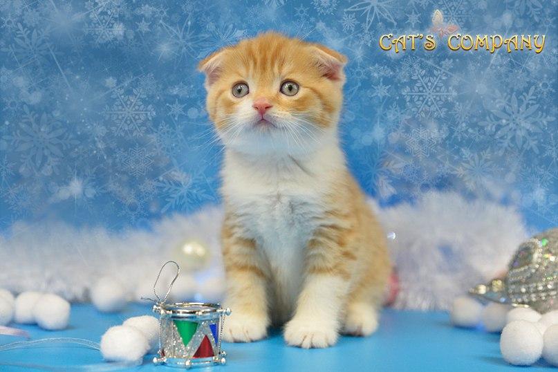 Один Честер Cat's company SFS d24 03