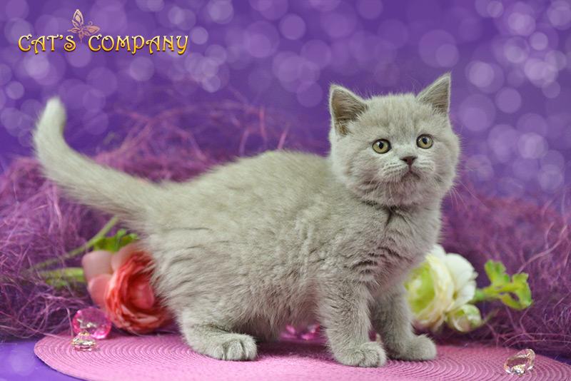 Джессика Честер Cat's Company