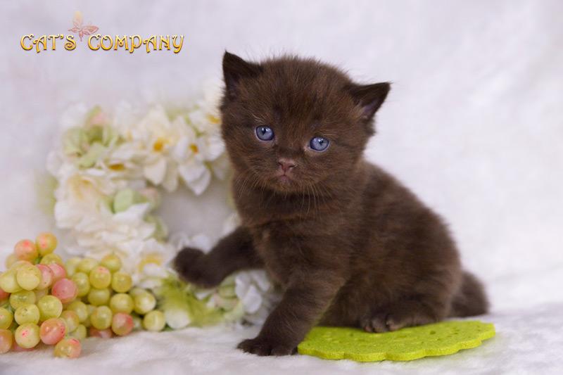 Стейси Честер Cat's Company BRI b