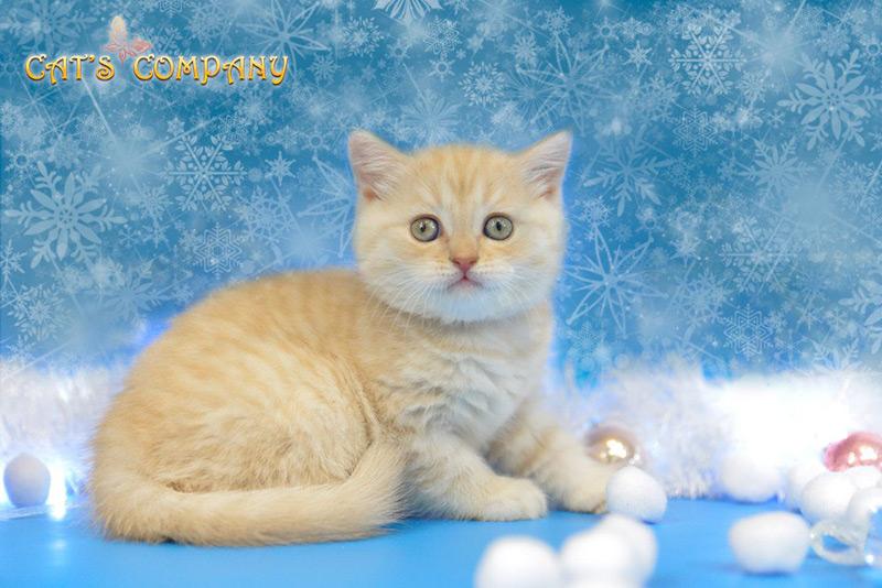 Нотариус Честер Cat's Company