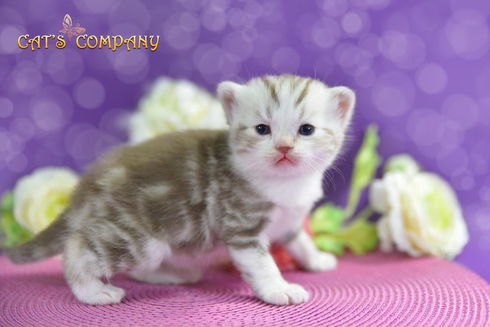 Корвин Шекспир Cat's Company