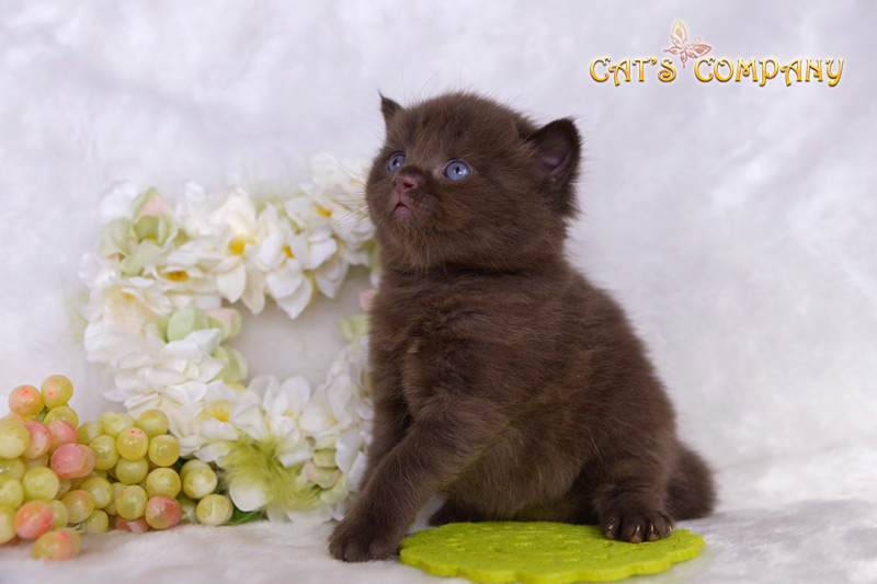 Стейси Честер CatCat's Company BRI b