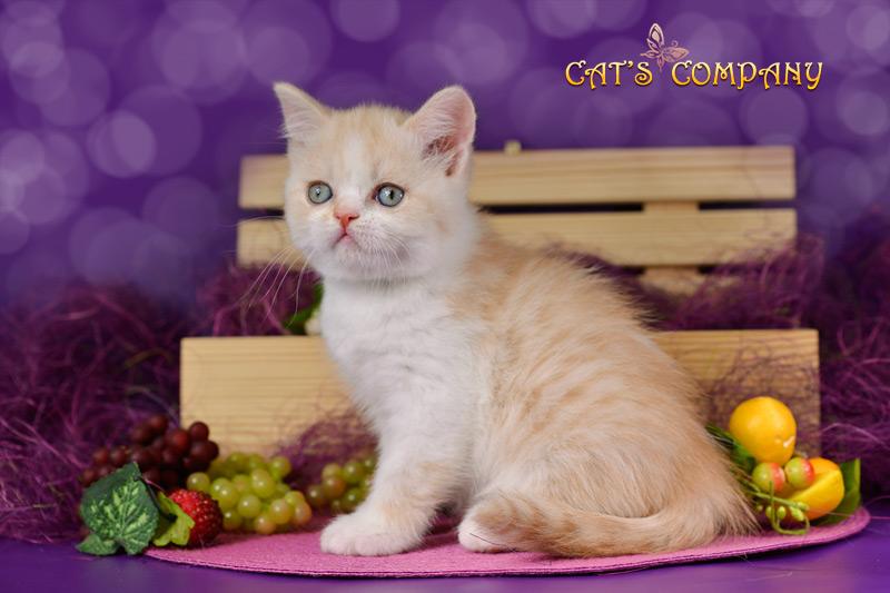 Орфей Шекспир Cat's Company