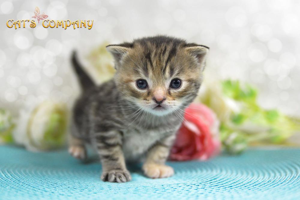 Кимберли Шекспир Cat's Company