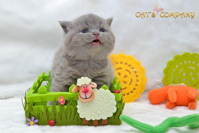 Джефри Честер Cat's Company