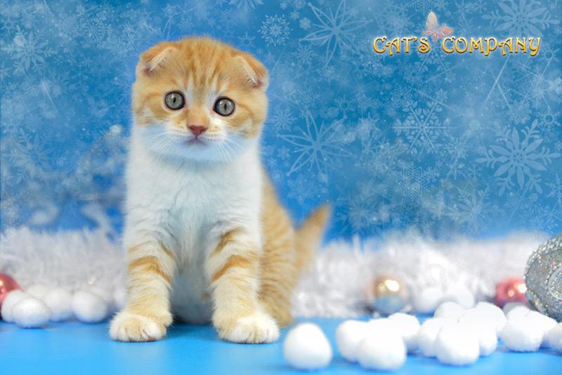 Нортон Честер Cat's Companyn-14i