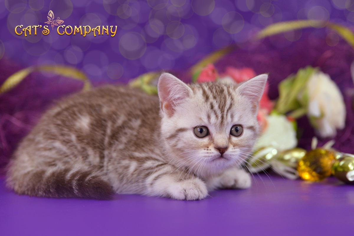 Корделия Шекспир Cat's Company