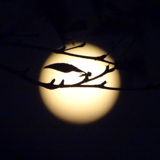 Lune_par_Chloé_4.JPG