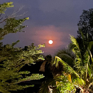 Lune à travers végétation.JPG