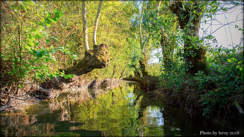 Maillezais_Vendée