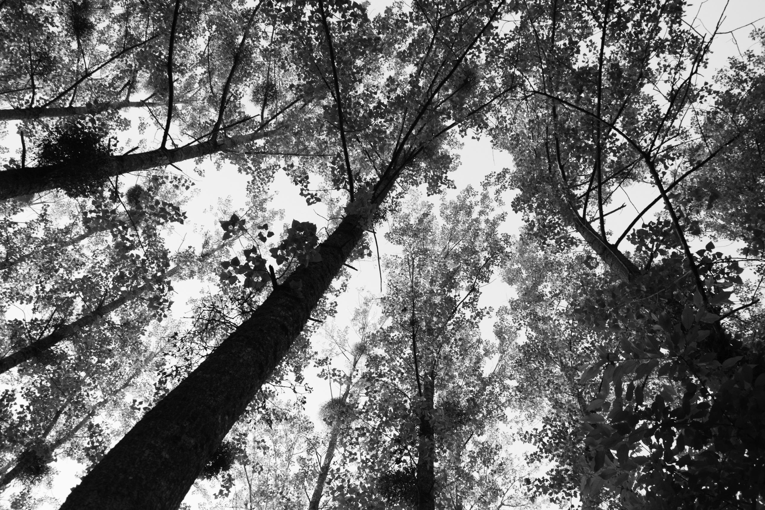 Sous les jupes des arbres