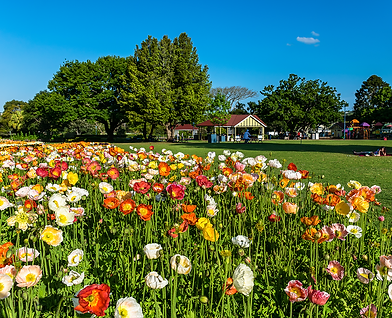 toowoomba park.png