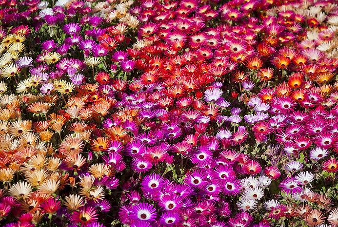carnival-flowers.jpg