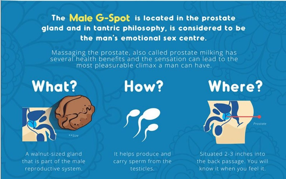 Where is the prostate located?