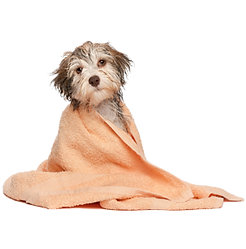 Our wash services here at The Paw Spa in Corona
