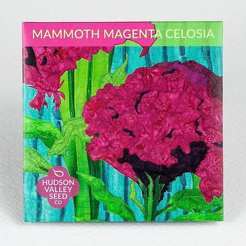 Mammoth Magenta Celosia Flower