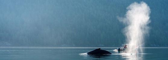 humpback-whale-esperanza-inlet-peetz.jpg
