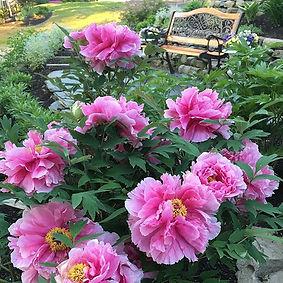 Cozy spot #gardenbench #inthegarden #peo