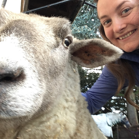 Part Six: The Balance of Being and Doing - including implications for the veterinary profession