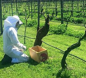 swarm on vines.jpg