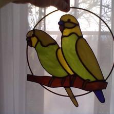Tiffany papagájok