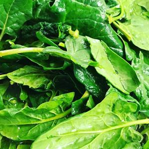 fresh spring spinach
