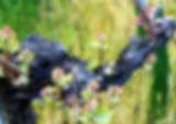 vigneron2.jpg