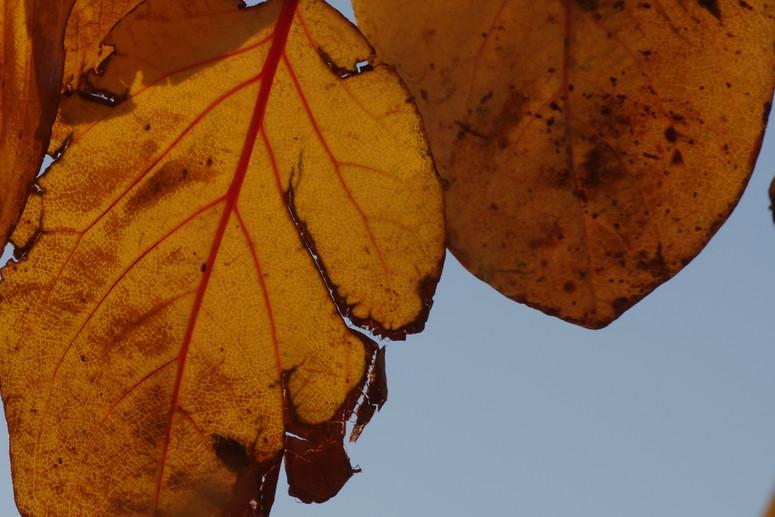 Őszi színek.JPG