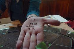100+ Year old Glazing Pins