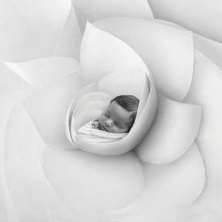 kelly flower pihu.jpg