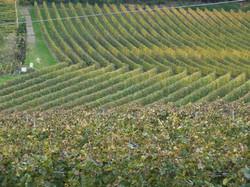Südtiroler Rebfelder