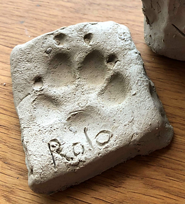 Rolo's Paw .png
