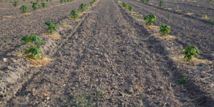 mone grows its-my.money - paulownia plantation Indonesia