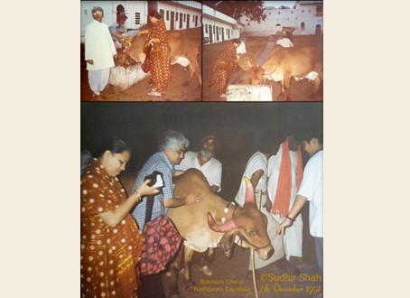 ShreeNathji Gaushala-Pragna Shah anubhuti