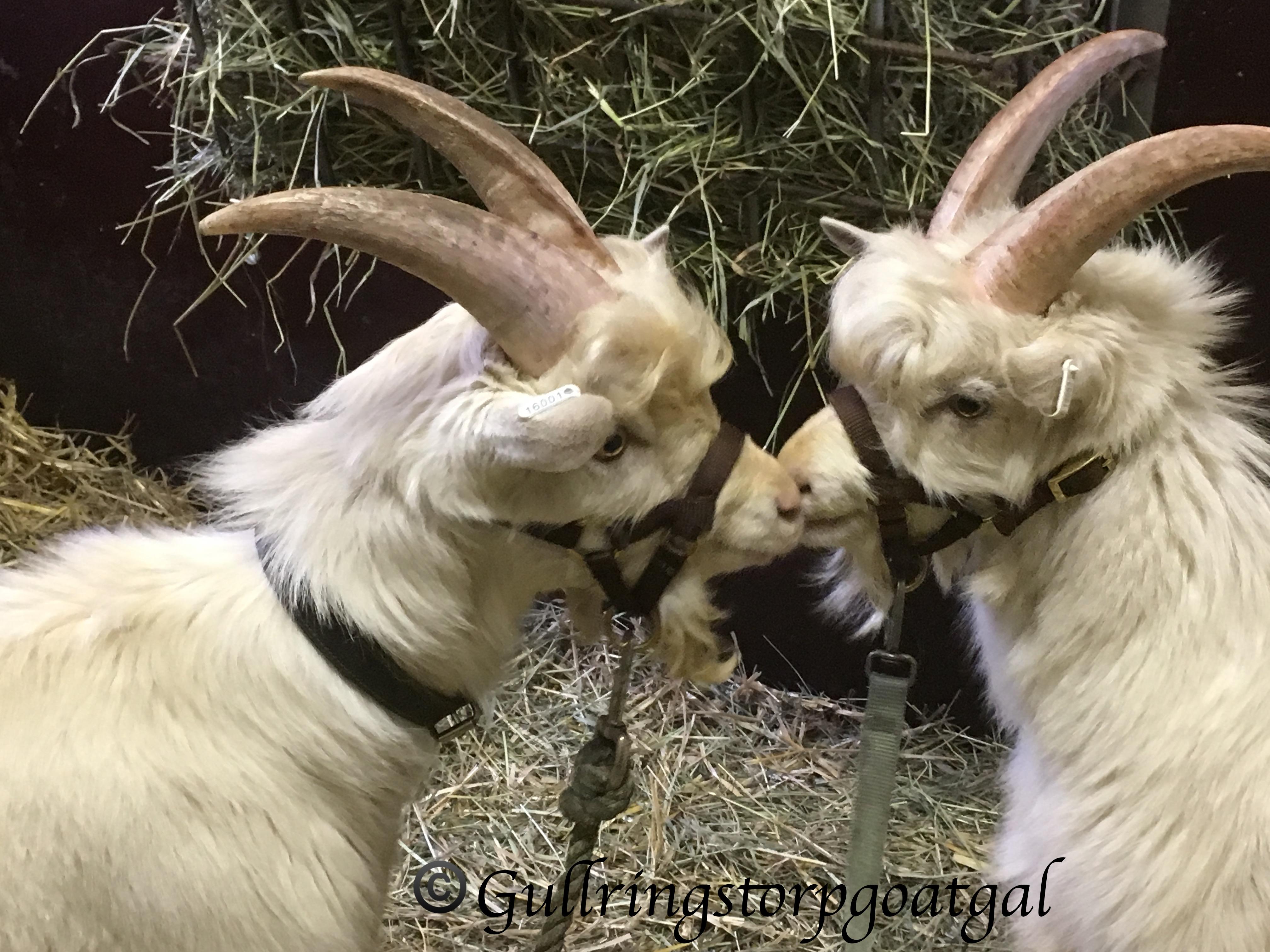 Li'l Sis Goat Milk Soap Bucks