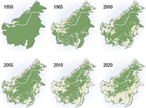Deforestation of Borneo 1950-2020