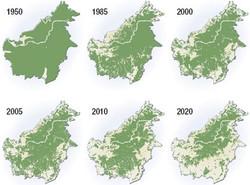 Deforestation of Borneo 1950-2020