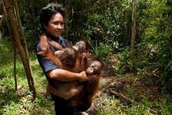 Orangutan Rescue Centers