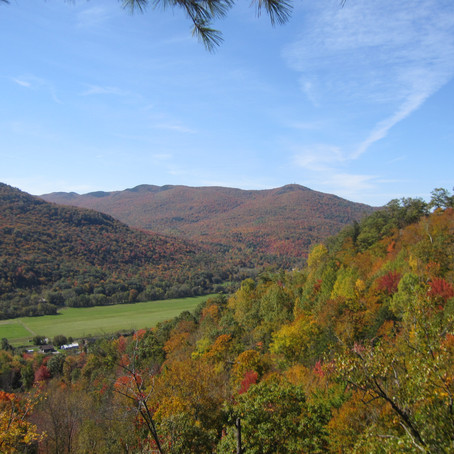 How many acres do Licensed Foresters manage in Vermont?